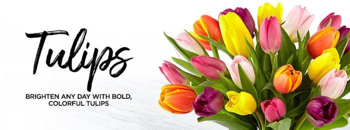 4457_Tulips_Alt4