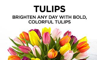 4457_Tulips_Alt4_Mobile